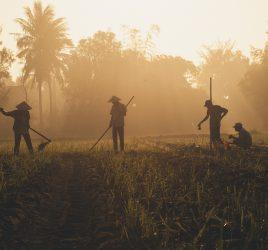 May 2021 Farmers